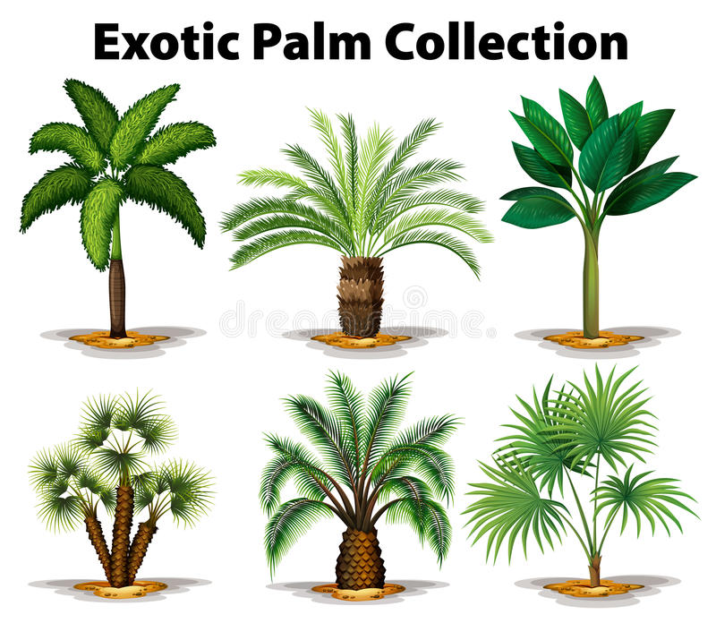 Different types of exotic palm trees royalty free illustration