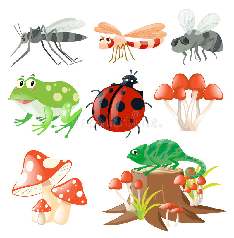 Different types of insects stock illustration