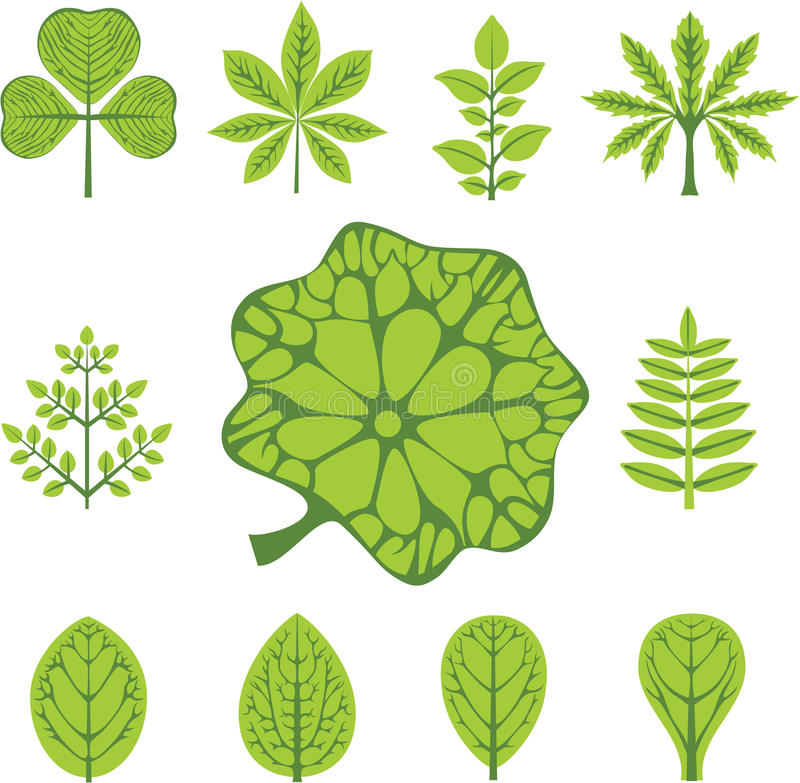 Different types of leaves