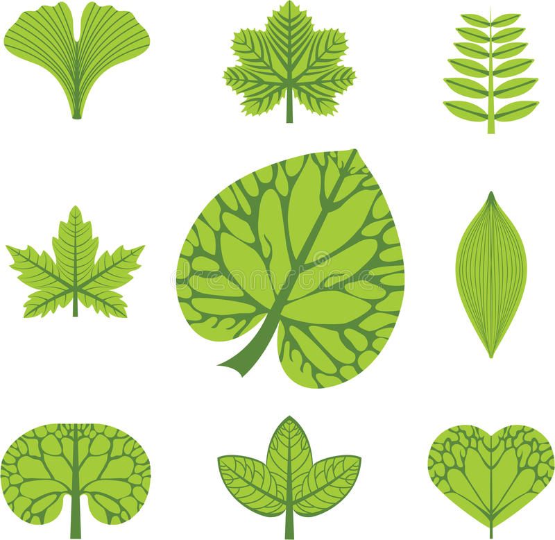 Download Different  types of leaves stock vector. Image of element - 25338379