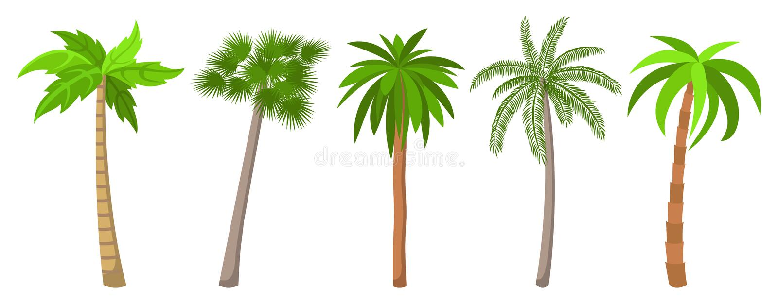 Different types of palm trees set. vector illustration