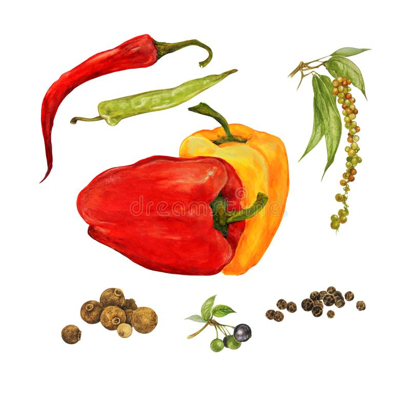 Different types of peppers, set, watercolor illustration royalty free illustration