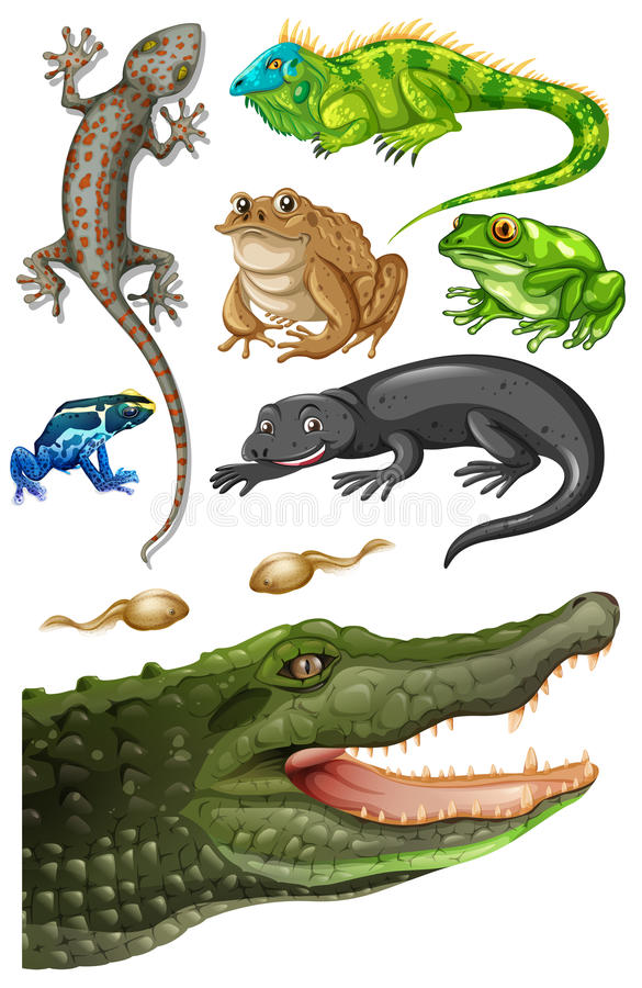 Different types of reptiles vector illustration