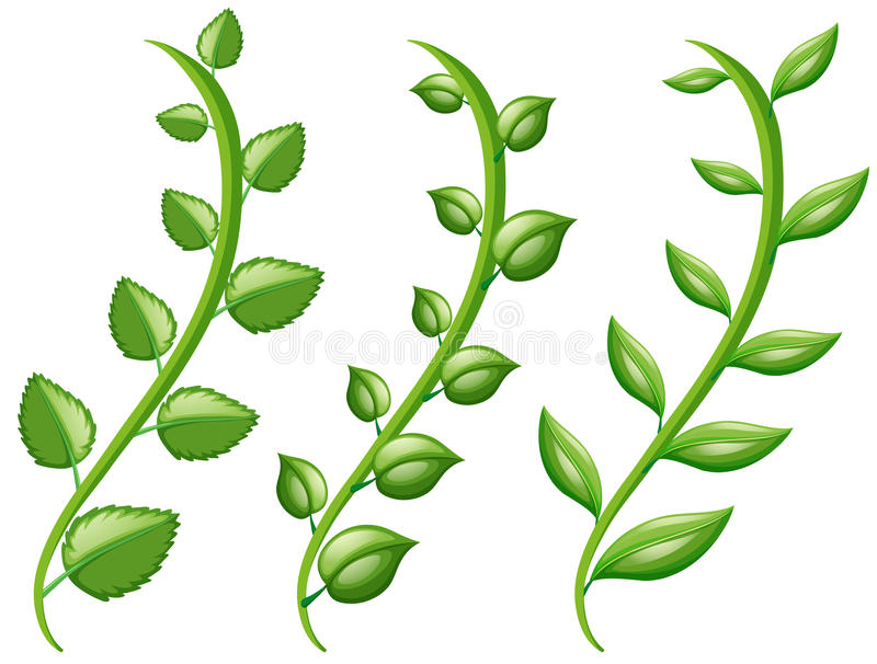 Vine And Different Shapes Of Leaves Stock Vector - Illustration of