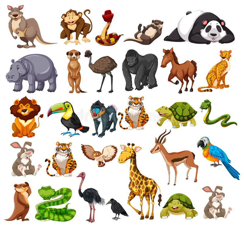 Different Types Of Wild Animals On White Stock Vector