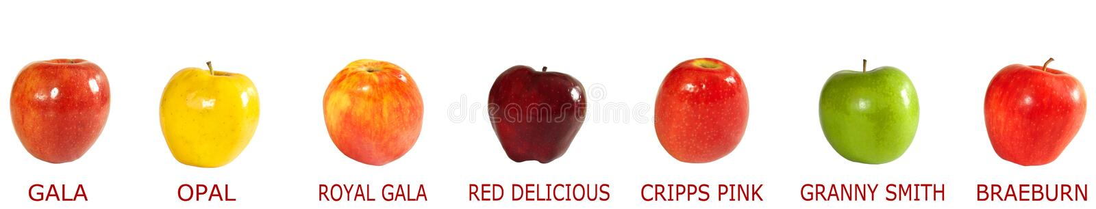 Download Assortment of apples stock photo. Image of vitamins, royal - 30227618