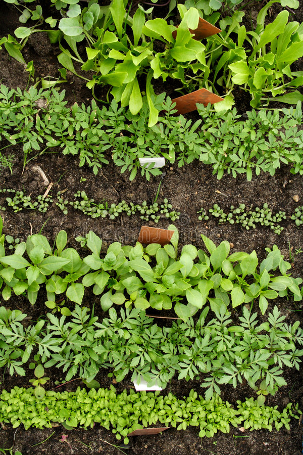 Different vegetable seedlings with marking labels royalty free stock images
