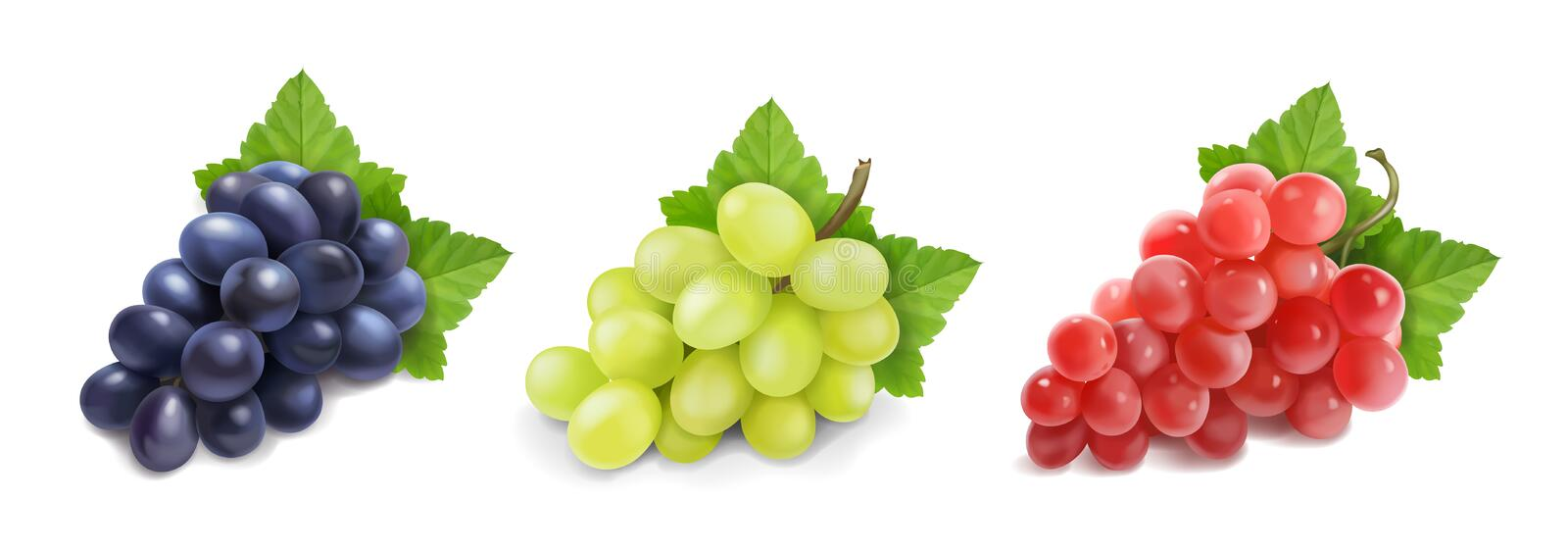 Red Wine Juice Shiraz Grape Red Globe, red grape transparent background PNG  clipart | HiClipart