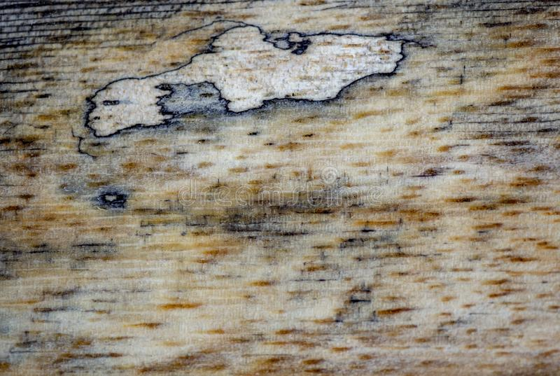 Different wood textures and backgrounds IV royalty free stock photos