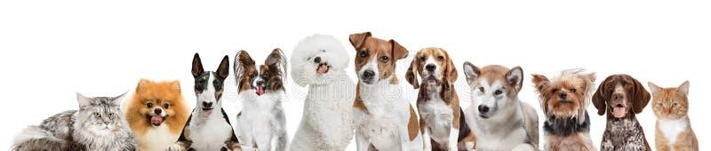 Differents hundkapplöpning som ser kameran som isoleras på en vit bakgrund royaltyfri foto