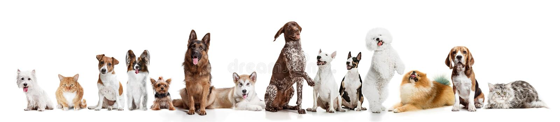 Differents hundkapplöpning som ser kameran som isoleras på en vit bakgrund royaltyfri bild