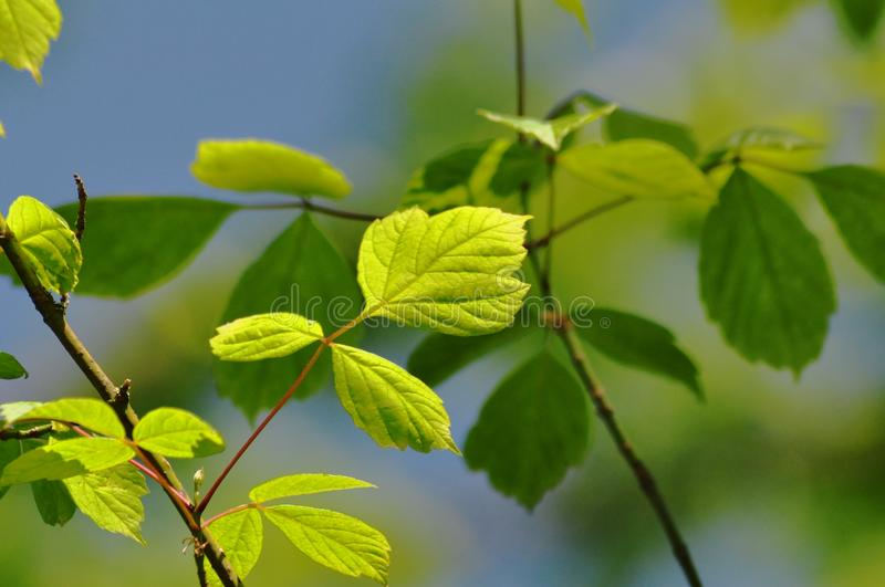 Diffrent shades of green royalty free stock images