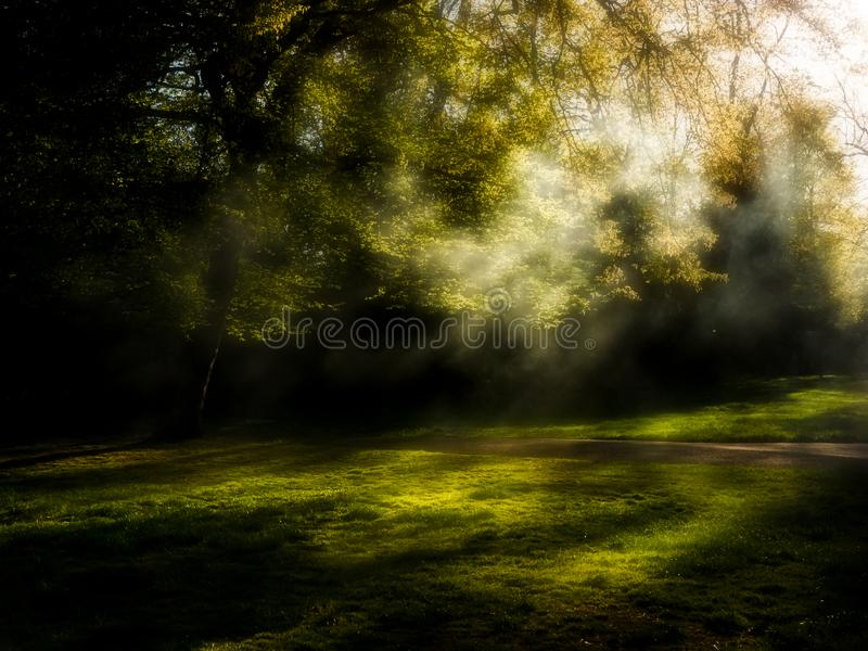 Diffuse lit outdoor scene in dark corner of park. royalty free stock image