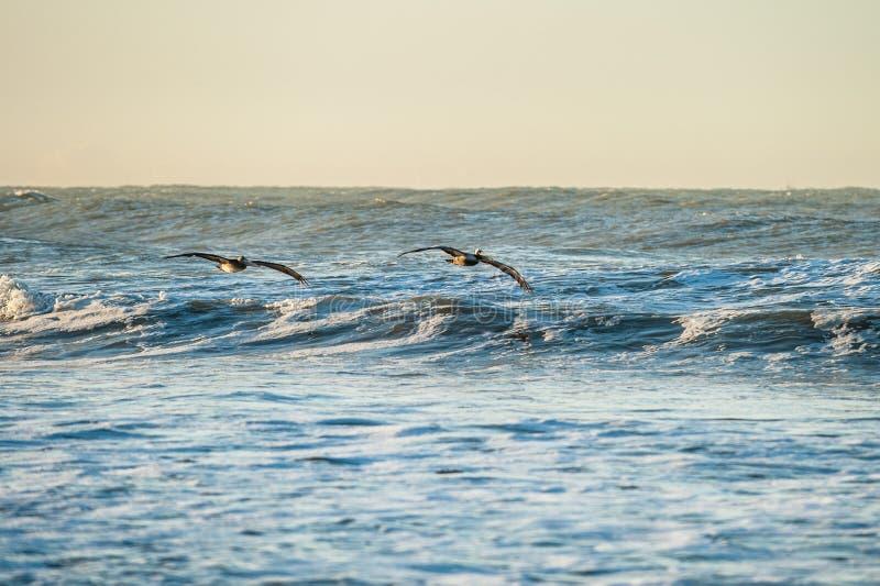 Diffusion d'ailes pour surfer les vagues photos libres de droits