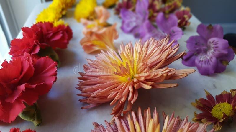 Diffusion de fleur images stock