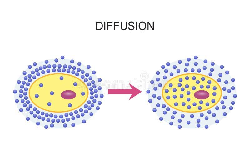 Diffusione attraverso le membrane cellulari illustrazione di stock
