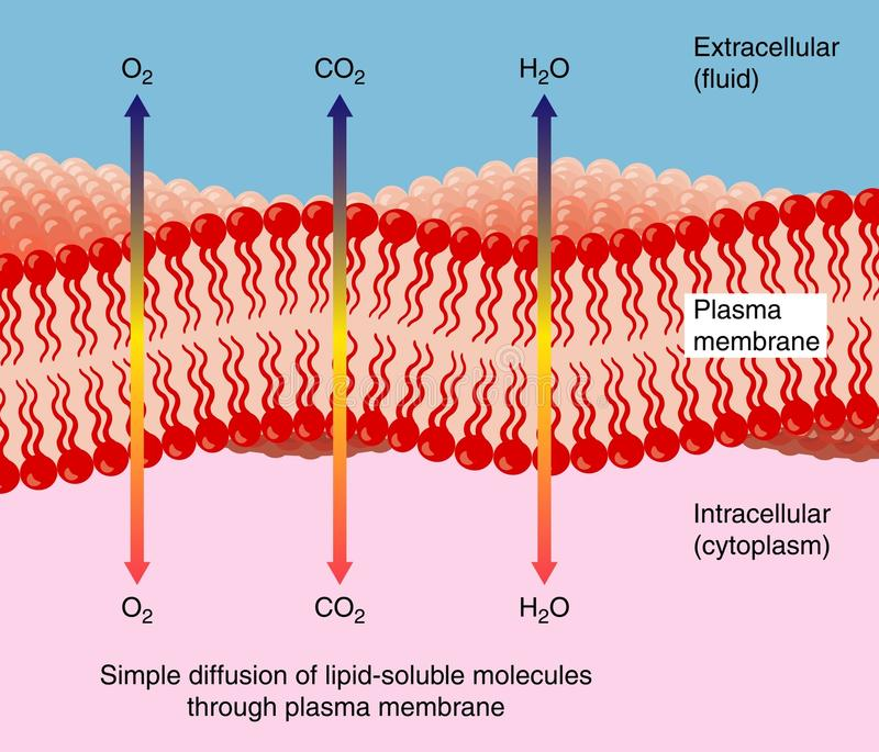 Difusão através da membrana de plasma ilustração stock