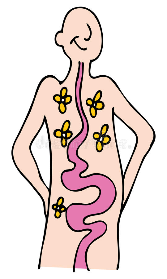 Digestión de la salud ilustración del vector