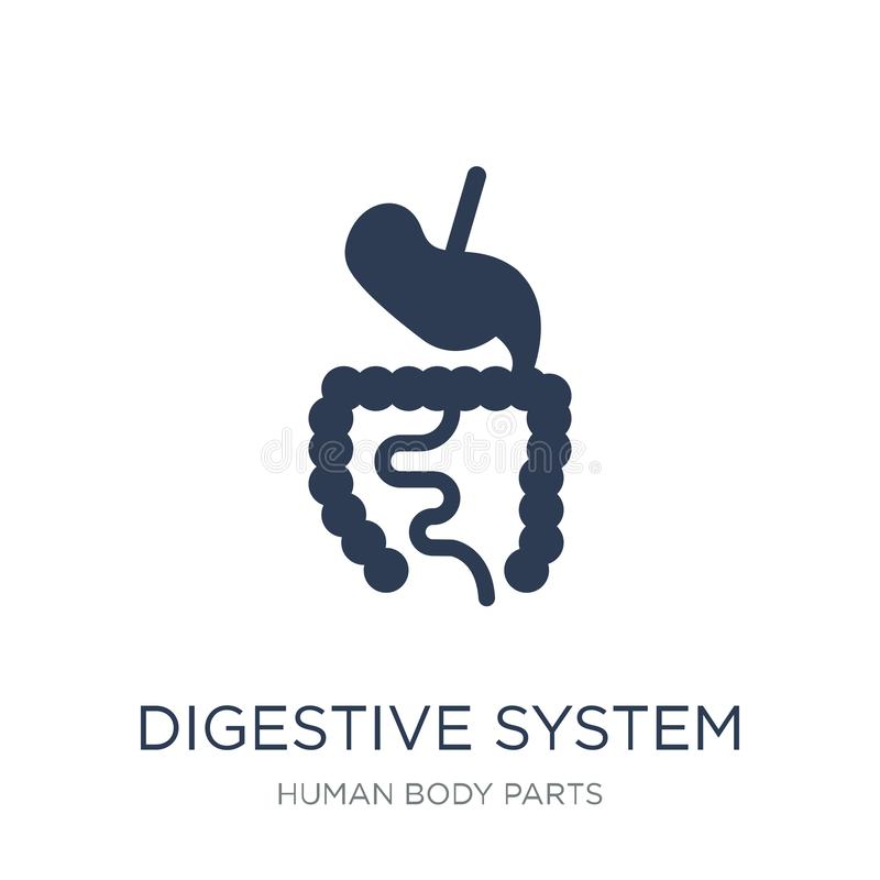 Digestive System icon. Trendy flat vector Digestive System icon royalty free illustration