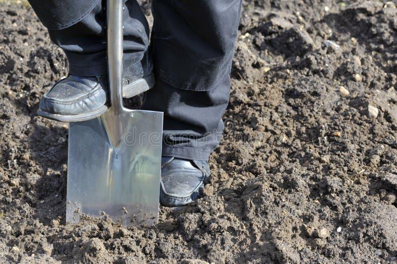 digging stock fotografie