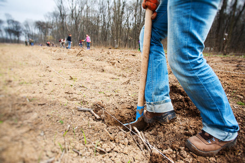 Digging soil using a shovel. A person is digging the soil, using a shovel, for planting seeds with a guide line stock image