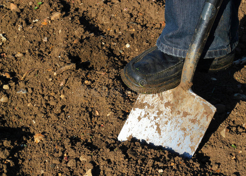 Digging with a spade. stock photo