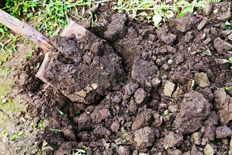 Download Digging with spade stock photo. Image of digging, gardening - 34251986