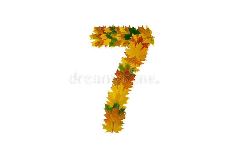 Digit 7 from autumn maple leaves isolated on white background. Alphabet from green, yellow and orange leaves stock photo