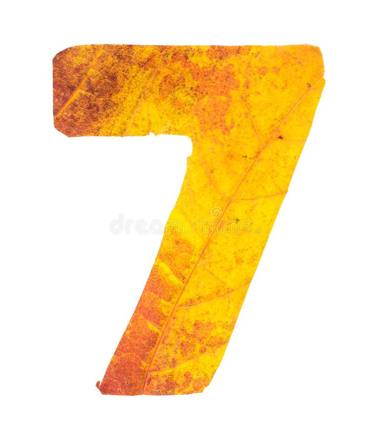 Digit 7 carved of autumn leaves royalty free stock photos