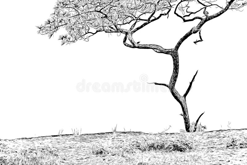 Digital drawing of pine tree in black and white color on white background. Traced photo vector illustration