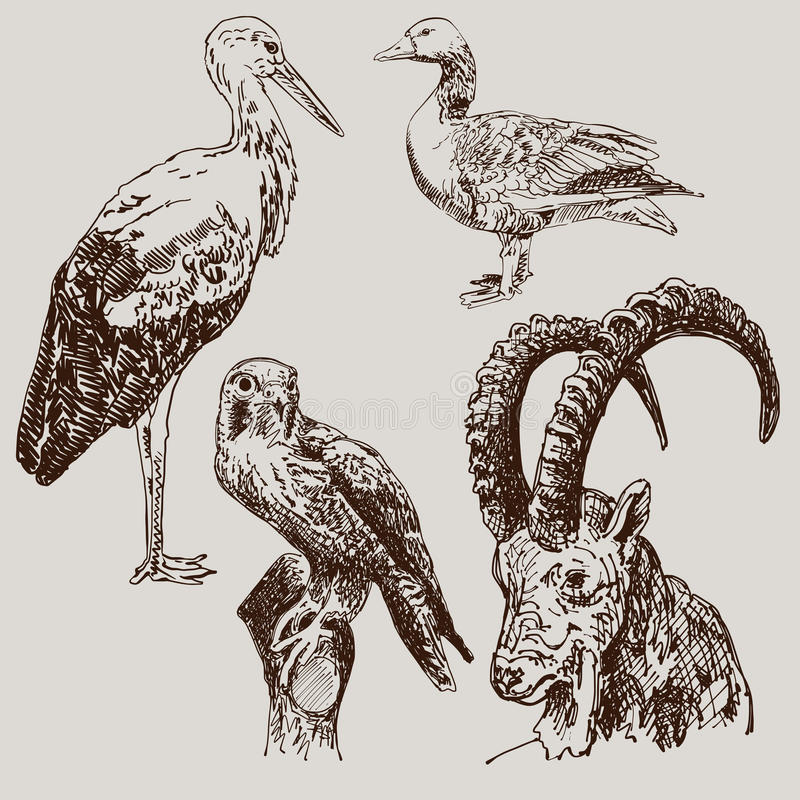 Digital drawing of stork, falcon, goose and goat stock illustration