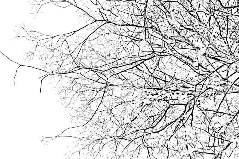 Digital drawing of tree branches in black and white color on white background. Traced photo stock illustration