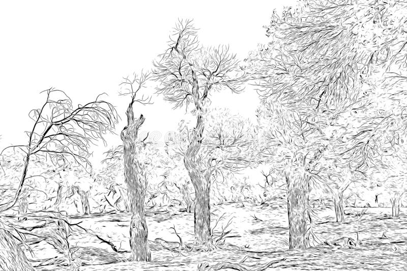 Digital drawing of trees in black and white color on white background. Traced photo stock illustration