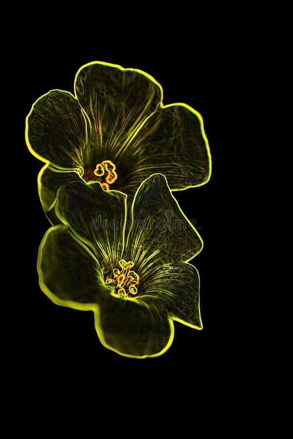 Free Digital Flower 4 Stock Photos - 2343013
