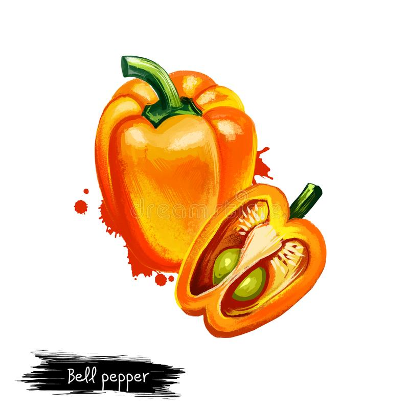 Digital illustration of Bell pepper or Capsicum annuum isolated on white background. Organic healthy food. Yellow vegetable. Hand stock illustration
