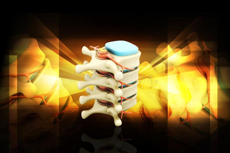 3d rendered human spine in colour background. Digital illustration of 3d rendered human spine isolated on a colour background stock illustration