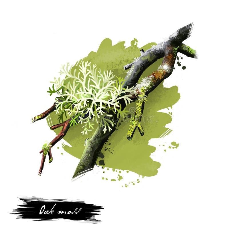 Digital konstillustration av ekmossa, Evernia prunastri som isoleras på vit bakgrund Olivgrön grön art av laven, komposit royaltyfri illustrationer