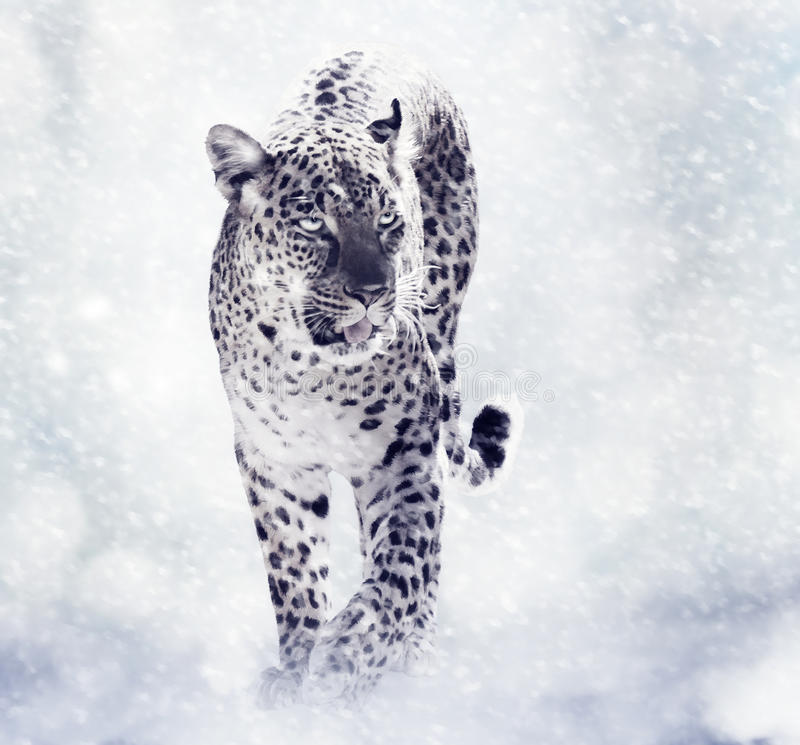 Digital Painting Of Leopard. Walkind in the Snow vector illustration
