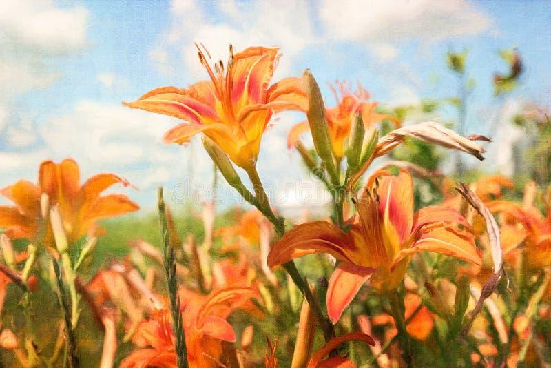 Download Digital Painting Of Orange Daylilies Stock Illustration - Image: 23863905