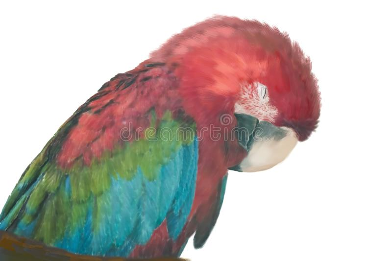 Digital Painting Of A Scarlet Macaw Resting stock illustration