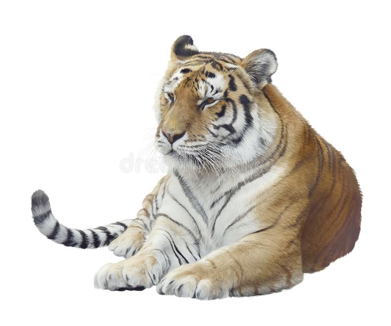 Digital Painting Of tiger portrait. Isolated on white background royalty free stock images