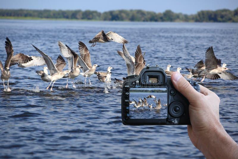 Digital photo camera stock images