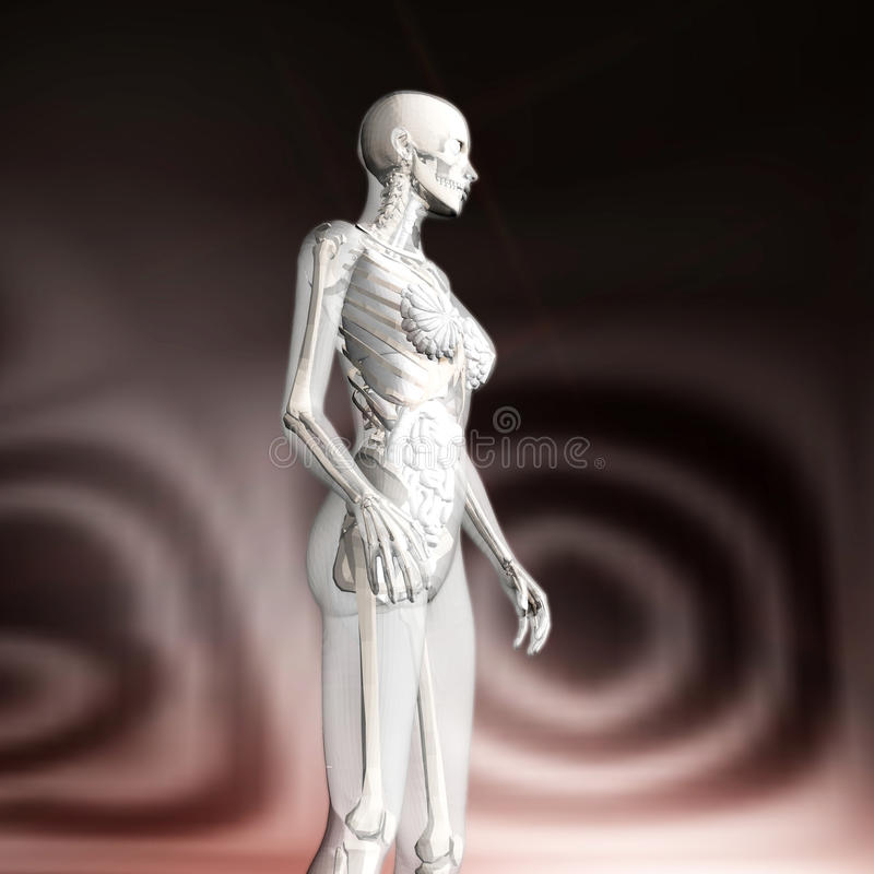 Download Digital Rendering Of The Female Human Anatomy Stock Illustration - Illustration: 88428375