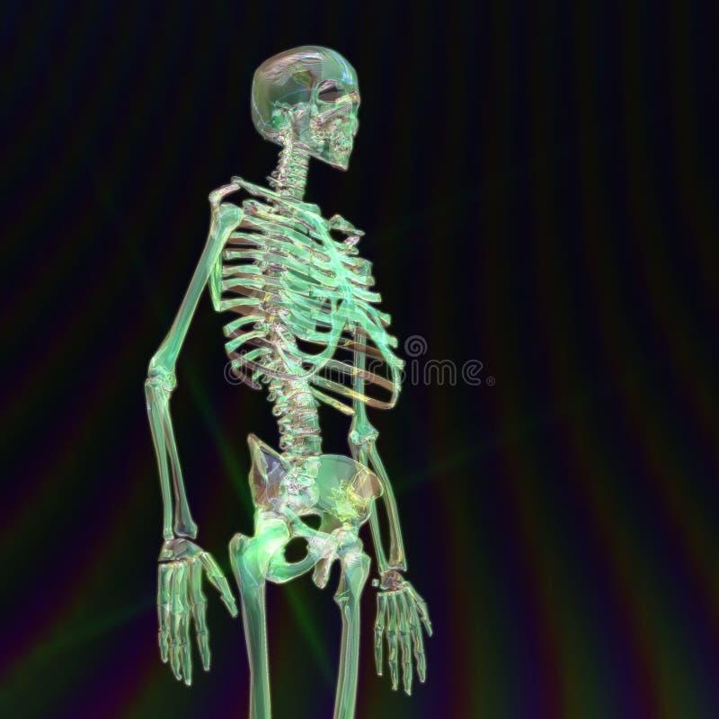 Download Digital Rendering Of A Human Skeleton Stock Illustration - Illustration of imagery, science: 88426999