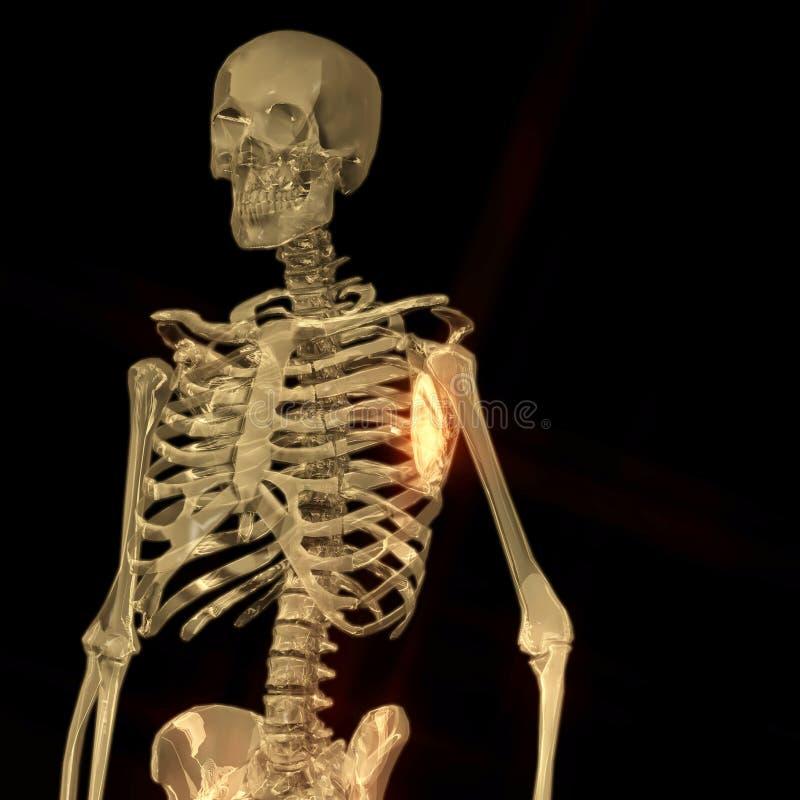Download Digital Rendering Of A Human Skeleton Stock Illustration - Illustration of bones, reality: 88427195