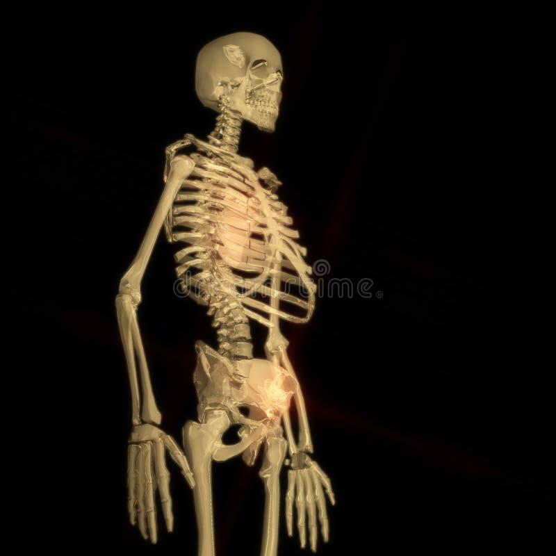 Download Digital Rendering Of A Human Skeleton Stock Illustration - Illustration: 88429157