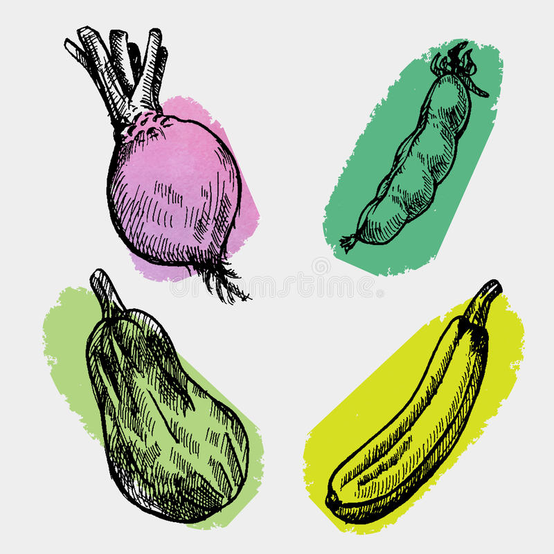 Digital vector detailed color cabbage royalty free illustration