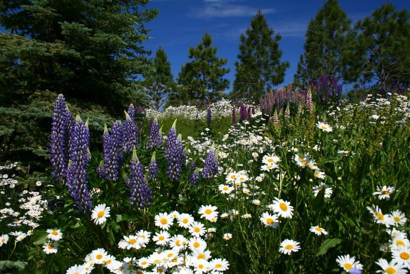 Digitale 11 photo libre de droits