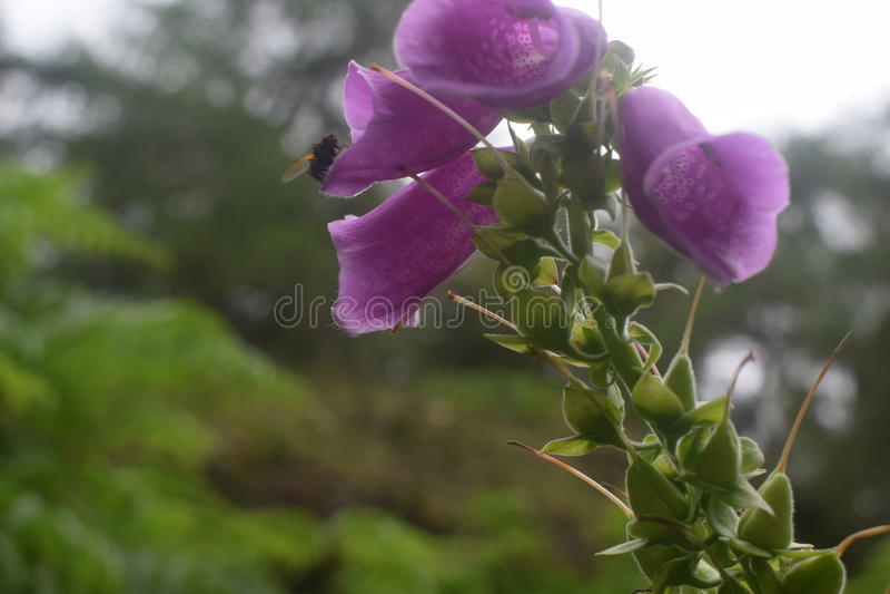Digitale e ape immagini stock