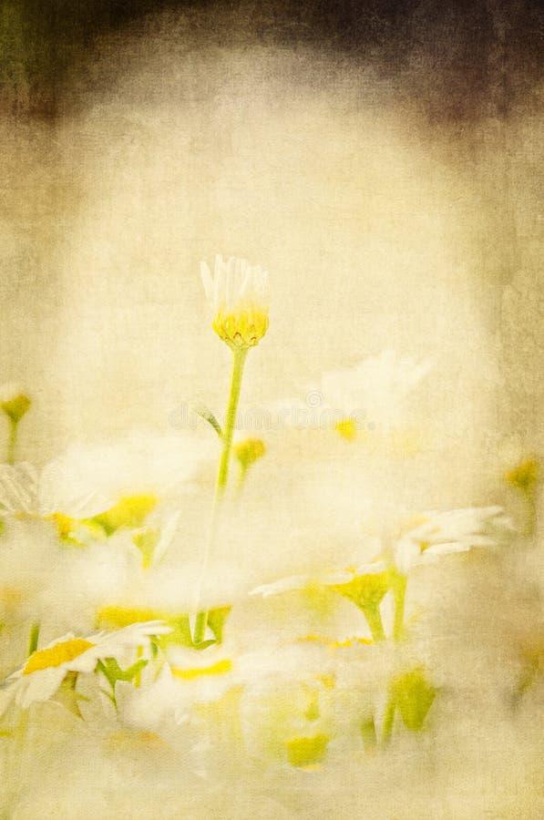 Digitale Geweven Illustratie van een Macrofoto van Argyranthemum Alessia Flowers Grafische ontwerpachtergrond royalty-vrije stock afbeeldingen